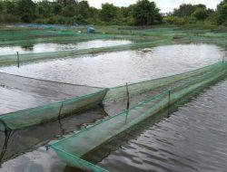 Kolam BBI Disewakan, RLH Pertanyakan Pengadaan Bibit Ikan dan Dana Operasional