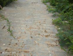 Diduga Jalan Rabat Beton Desa Manis Mato Di kerjakan Asal- Asalan