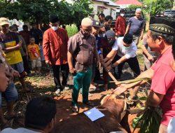 Polres Merangin Beserta Jajaran Polsek Menyerahkan 29 Ekor Hewan Korban di Hari Raya Idul Adha