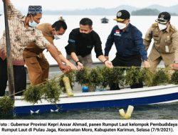 Gubernur Kepri Panen Rumput Laut di Pulau Jaga-Karimun